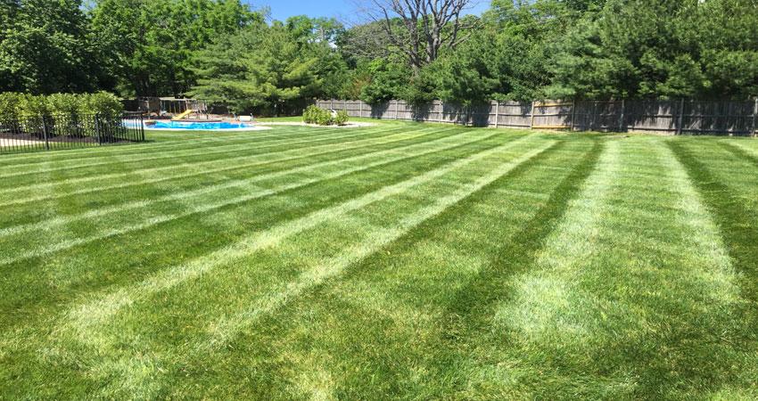 Swedesboro NJ lawn service thatch aerate sod organic fertilizer